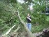 windstorm 2